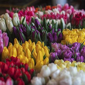 300_flores2